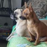 BooBoo & Yoda